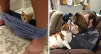 Dess chats qui n'ont pas la MOINDRE conception de l'intimité: voici leurs légendaires incursions