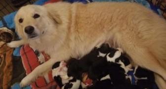 Perde tutti i suoi cuccioli in un incendio: la tristezza di Daisy viene cancellata dal destino