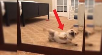 De hond ziet een 'indringer' in de spiegel': de manier waarop hij deze probeert af te schrikken is... hilarisch!