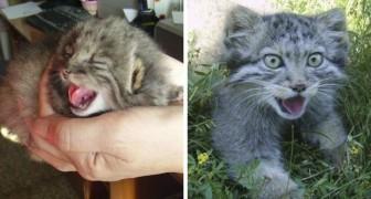 Un fermier trouve des chatons, mais c'est en fait bien plus que des chats...