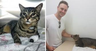 Ritrovato un gatto scomparso da 11 anni, ma il legittimo padrone fa ciò che è meglio per lui