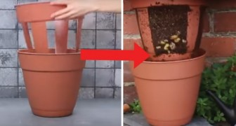 A clever and practical idea -- a potato planter!