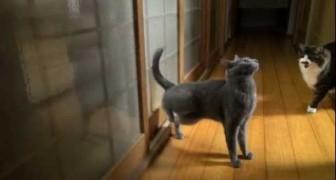 Un gatto molto educato bussa alla porta