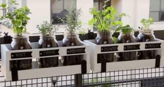 Cultivacion casera de hierbas aromaticas: tan practica y bella no la vieron jamas