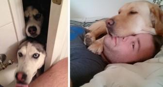 Wenn dir dein Hund überall hin folgt, dann bedeutet es dass er dich bedingungslos liebt und gerne bei dir ist
