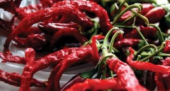 Mangiare peperoncino fa vivere più a lungo: uno studio scopre che riduce del 13% la mortalità