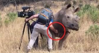 Werken in de savanne: deze man maakt wel van heel dichtbij kennis met een neushoorn!