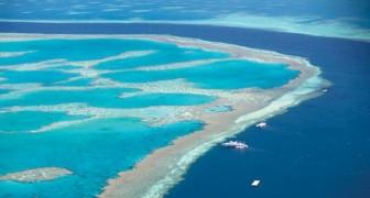 90% des Korallenriffs ist aufgrund der Erwärmung der ozeanischen Gewässer abgestorben