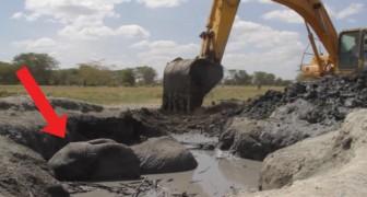 Dit olifantje zat 12 uur vast in de modder: dit zijn de dramatische reddingsbeelden
