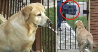 Zijn maatje heeft een aantal dagen bij de dierenarts doorgebracht: hun weerzien is aangrijpend!