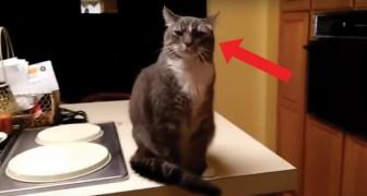 Questo gatto ha un modo TUTTO SUO di salutare la padrona quando rientra a casa