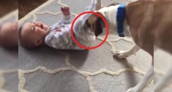 De beste babysitter? Deze video toont aan dat dat onze trouwe viervoeter is!
