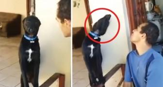 Le chien est coupable et il le sait. Mais la façon avec laquelle il tente de se faire pardonner ? Comment résister?