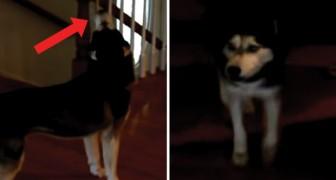Het baasje van deze hond vraagt: Ben je dom? Zijn antwoord is duidelijk!