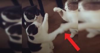 Gli animali hanno una loro personalità: questi 3 gatti ne sono la (Divertentissima) prova vivente