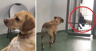 Questo cane sta per rivedere i propri fratelli 4 anni dopo essere stato adottato: gustatevi la scena