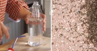 Repelente natural para formigas. Veja como deixá-las longe da cozinha.