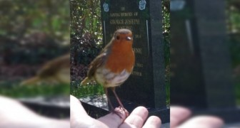 While praying at the cemetery for her deceased son, this woman was visited by a robin