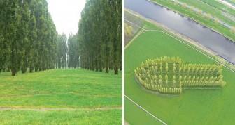 Un gruppo di alberi piantati in un campo: solo dall'alto si capisce cosa rappresenta questo luogo