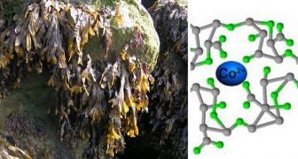 Un team di ricercatori crea un super-conduttore energetico partendo dalle piante marine