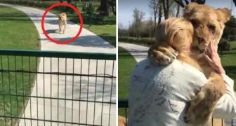 Due leonesse rivedono questa donna dopo tanto tempo: ciò che provano per lei è palese