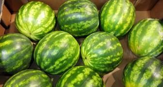 Welche Melone sollst du kaufen? Hier die 5 Regeln die dir helfen!