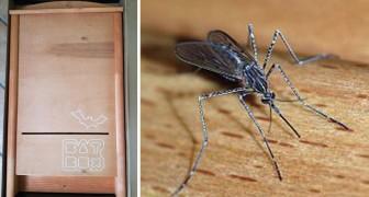 Auf der Suche nach einer natürlichen Lösung gegen Mücken? Fledermäuse!