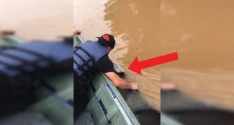 Navigano 1 ora per salvare una mucca dall'alluvione: l'arrivo sulla terraferma vi strapperà una lacrima