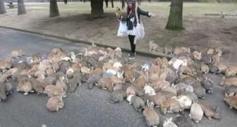 Mädchen vs. wilde Kaninchen