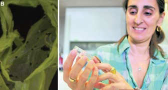 Una biologa italiana scopre per caso un bruco in grado di mangiare la plastica