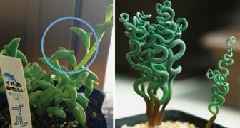 Ces plantes grasses sont aussi belles que particulières: vous aurez envie de les collectionner toutes