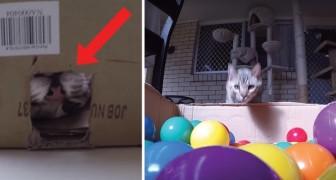 Deze kat krijgt een doos vol met ballen cadeau... het beste cadeau ooit!