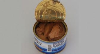 Buoni motivi per smettere di mangiare il tonno e comprendere che non è così salutare come sembra