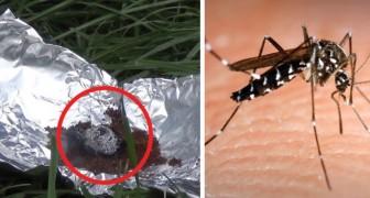 Last van muggen en wespen? Probeer deze remedie die rechtstreeks uit Libanon komt!