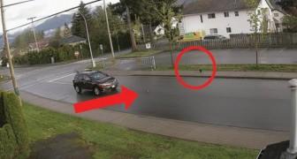 Uno scoiattolo in fuga da un corvo, una macchina e un gatto: in meno di 1 minuto accade tutto questo