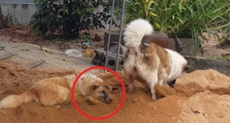 De ene graaft, de andere wordt begraven: deze video is hilarisch!