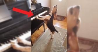 L'ultimo dei romantici: non dimenticherete questo cane né la sua passionale esibizione