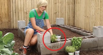 A raised garden bed made with concrete blocks?!? A clever solution!