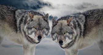 La parabola dei due lupi, una storia tramandata dalle tribù pellerossa