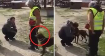 Un uomo ritrova il suo cane dopo 2 anni: il loro incontro è pura commozione
