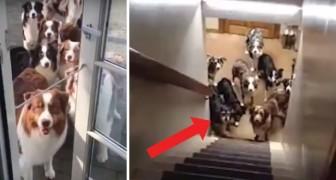 20 cani in attesa: nessuno muove una zampa finché non viene chiamato il loro nome