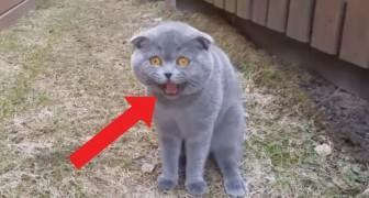 La padrona domanda e il gatto risponde: l'animale vuole avere l'ultima parola a tutti i costi