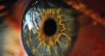 La première rétine artificielle organique arrive et redonnera la vue à des millions de personnes