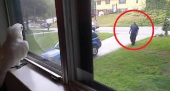 Un cacatua in finestra e il padrone che rientra a casa: ogni giorno si verifica questa tenera scena