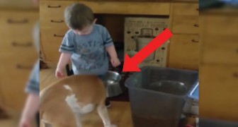 Het kind voert de hond, maar is zich niet bewust van de 'val' achter hem!