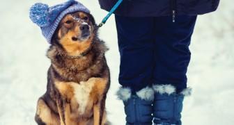 Perché a volte la morte del nostro cane è più dolorosa di quella di un amico?