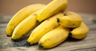 La banane est le fruit le plus polluant du monde: la manger n'est pas un geste sain et durable