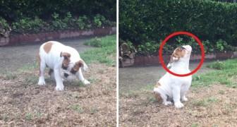 Er komt iets vreemds uit de lucht vallen: deze pup ziet voor de eerste keer regen!