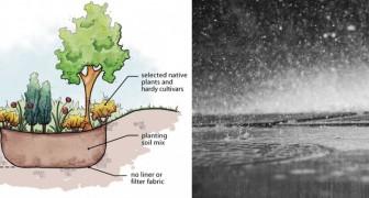 Rain garden, le aiuole che ci salvano dalle bombe d'acqua e aiutano l'ambiente