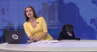 An unexpected guest appears during a Russian TV news broadcast!